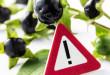 Giftige Pflanzen für Kinden und Babys im Haushalt