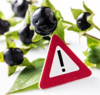 Giftige pflanzen im haushalt gefahr f r kind und baby - Giftige zimmerpflanzen fur kinder ...